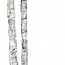 White Birch V