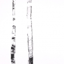 White Birch IX