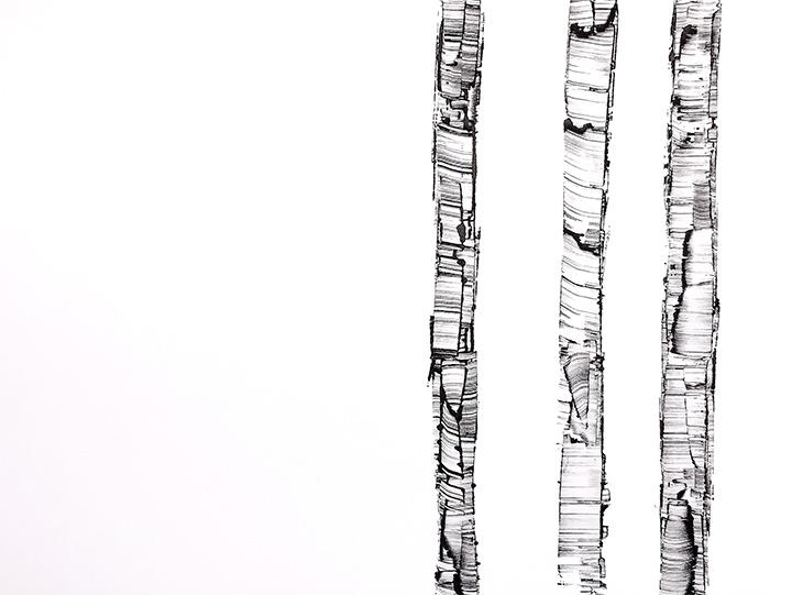 White Birch X