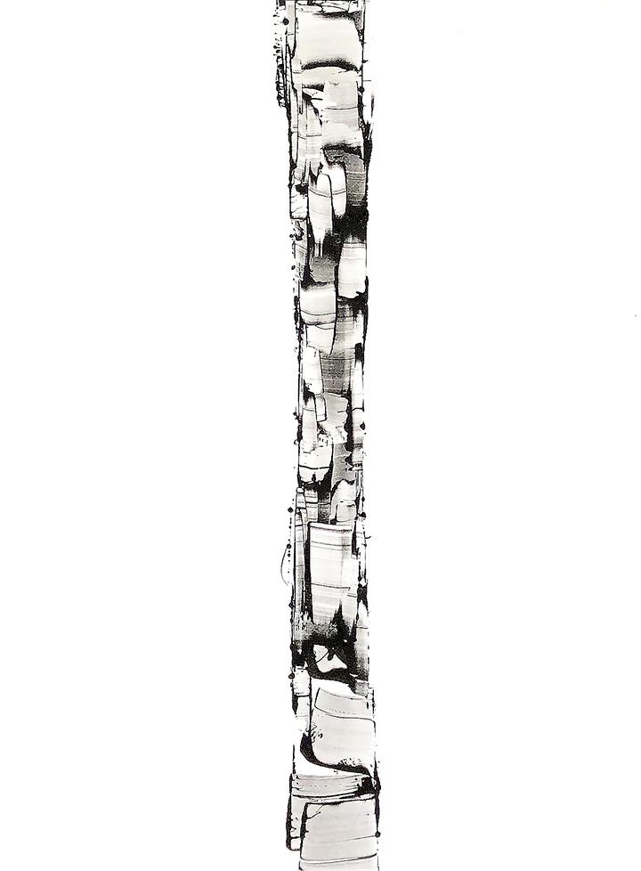 White Birch IV
