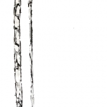 White Birch II