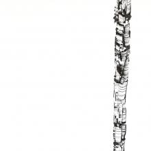 White Birch III