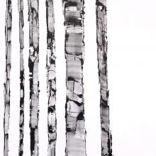 White Birch Series